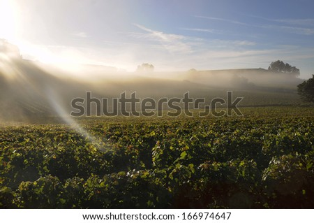 dawn on vineyards