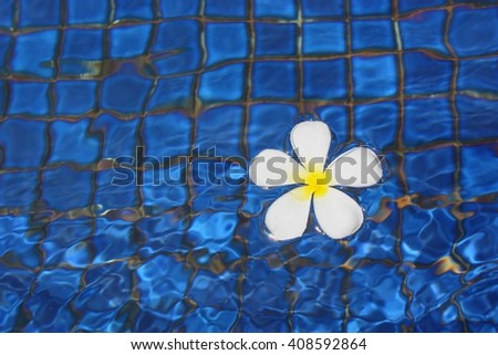 day light on summer at Swimming pool