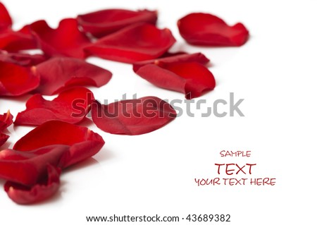 Day Valentine rose petals as background - stock photo