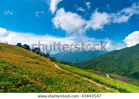 daylily field in the mountain with beautiful cloudscape background - stock photo