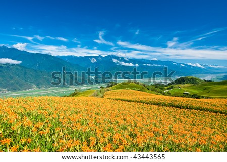 daylily in the mountain with beautiful cloudscape background - stock photo