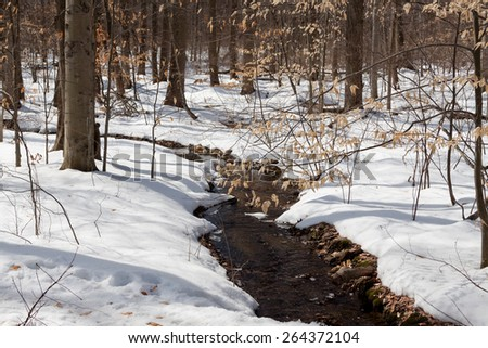 Daytime scene of trees during the winter season filled with snow  - stock photo