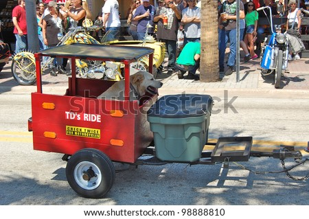 "DAYTONA BEACH, FL - MARCH 17:  A dog enjoys cruising Main Street in his customized trailer on St. Patrick's Day during ""Bike Week 2012"" in Daytona Beach, Florida. - stock photo"