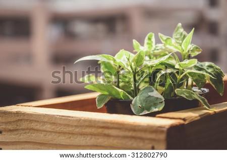 de focus ,selective focus plants in pots in wooden box on the terrace filter instagram - stock photo