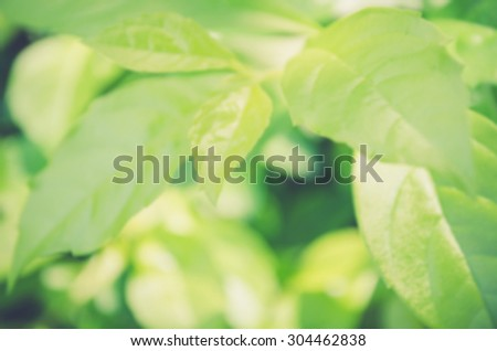 De focused/Blurred image of fresh, green leaves. Green leaves background. - stock photo