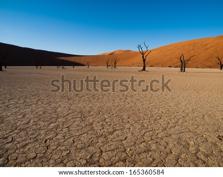 Dead acacia trees and red dunes of Namib desert (Namib Naukluft National Park, Namibia)