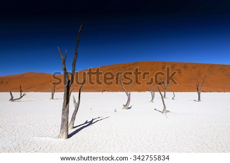 Dead acacia trees in Sossusvlei Pan, Namibia. Sossusvlei is a salt and clay pan surrounded by high red dunes, located in the southern part of the Namib Desert, in the Namib-Naukluft National Park.  - stock photo