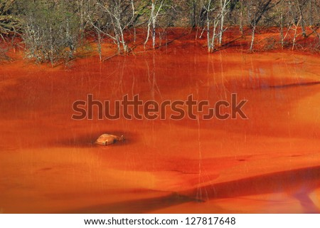 Dead animal representing the pollution effect of copper mining, lake Geamana, Romania - stock photo