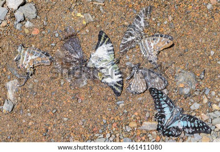Dead  beautyful butterflies on sand