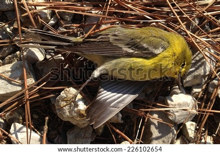 Dead bird in Tombigbee National Forest, Mississippi - stock photo