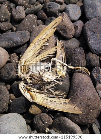 Dead Bird Skeleton, Lanzarote - stock photo