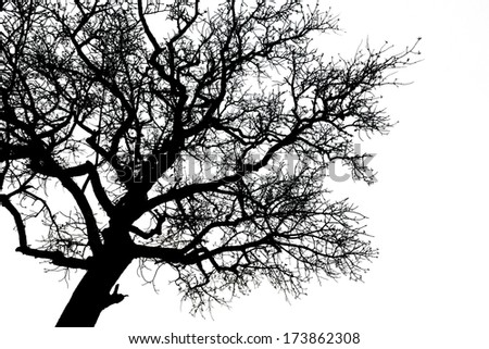 Dead black tree silhouette isolated on white background - stock photo
