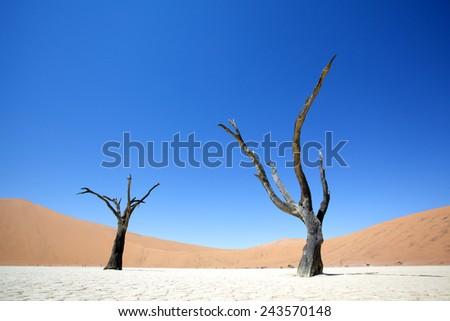 Dead black Trees in the Desert Landscape. Surreal scenic in amazing unreal Landscape. Sossusvlei, DeadVlei, Namib Desert, Namibia. - stock photo