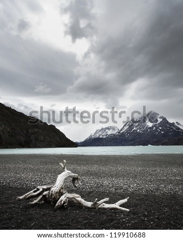 Dead Branch on a Rocky Beach in Torres del Paine National Park - stock photo
