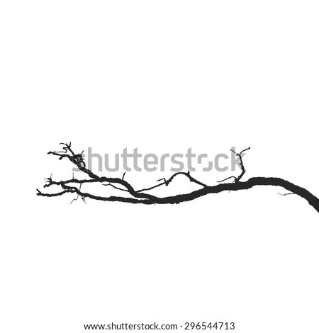 Dead branch on a white background isolated