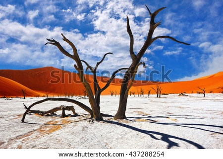 Dead Camelthorn Trees against red dunes and blue sky in Deadvlei, Sossusvlei. Namib-Naukluft National Park, Namibia, Africa - stock photo
