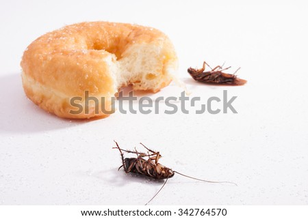 Noxious insect stock photos images pictures shutterstock for Mosquito donuts