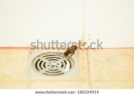 Dead  cockroach in bathroom on floor drain - stock photo