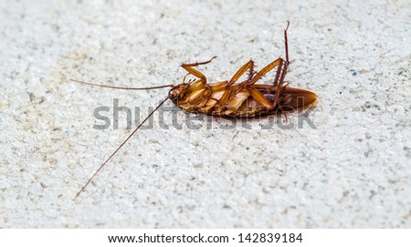 Dead cockroach isolate on white back ground. - stock photo