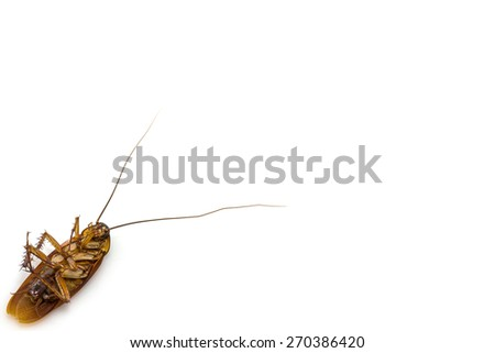 Dead cockroach isolated on a white background - stock photo