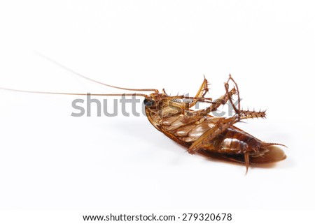 Dead cockroach isolated on white background. - stock photo