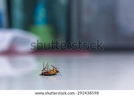 Dead cockroach on floor  - stock photo