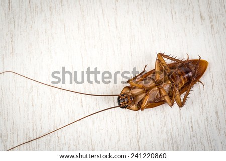Dead Cockroach on white wooden table - stock photo