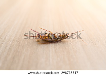 Dead cockroach on wood background