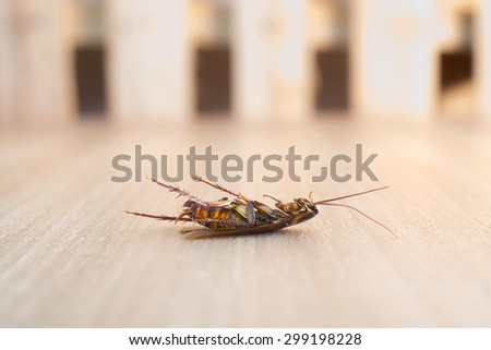 Dead cockroach on wood background - stock photo