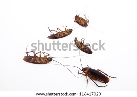 Dead cockroaches - stock photo