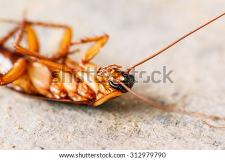 Dead cockroaches on floor - stock photo