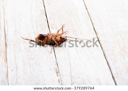 Dead cockroaches on the white floor. - stock photo
