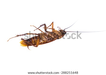 Dead cockroaches white background - stock photo