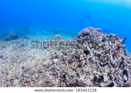 Dead coral reef - global warming,crown of thorns starfish, dynamite fishing and other practices are destroying the worlds' coral reefs - stock photo