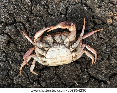 dead crab carcass on dry soil