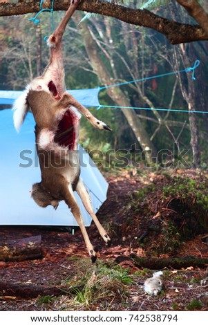 Dead Buck Stock Images Royalty Free Images Amp Vectors