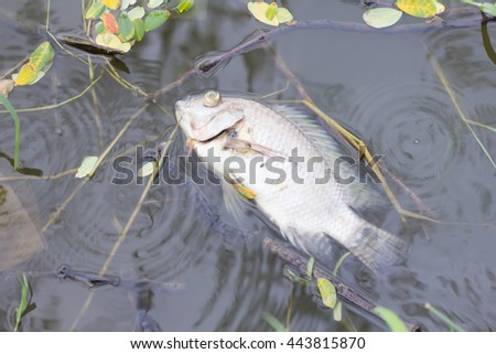 Fumble stock photos images pictures shutterstock for Flying fish morgantown wv