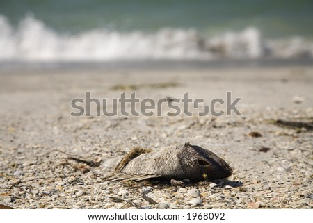 "Dead fish caused by ""red tide"" that occur sometime on Florida west coast,"