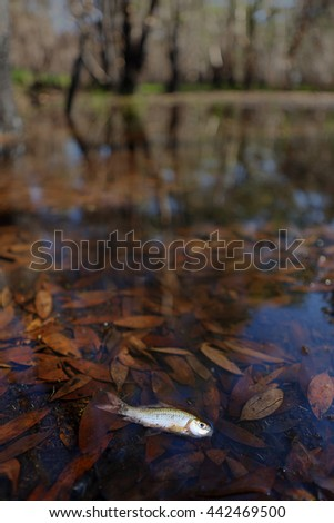Dead fish floated in the water with forest  - stock photo