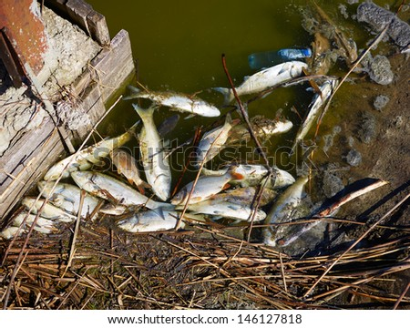 Dead fish in dirty water - stock photo