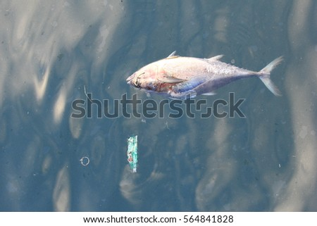 Dead fish in polluted ocean. Pollution environmental problem