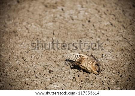Dead fish on dry soil - stock photo