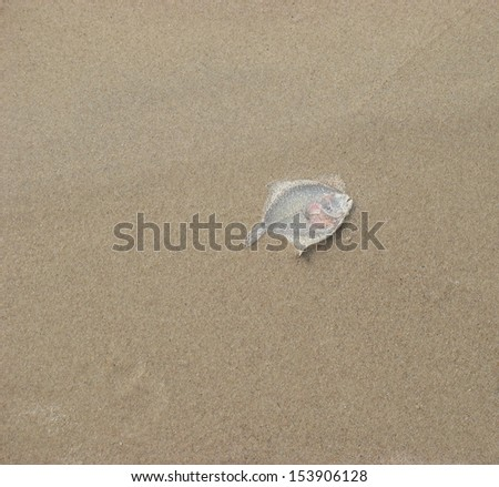 Dead fish on sand - stock photo