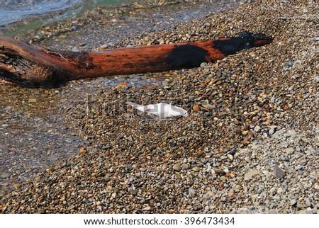 dead fish on the beach near a wood - stock photo