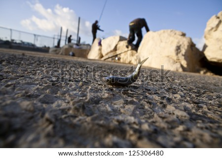 Dead fish out of water - stock photo