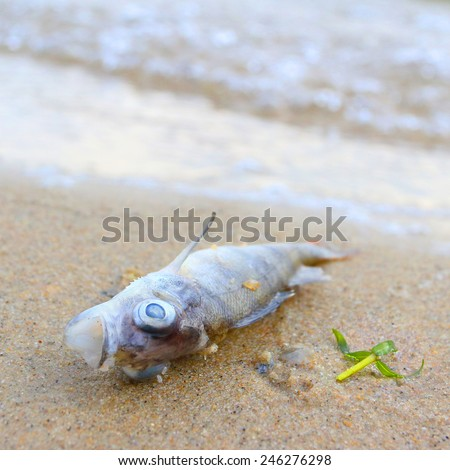Dead fish (Perca fluviatilis) on the beach. Water pollution concept. Picture with shallow DOF. - stock photo