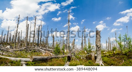 dead forest destroyed by wood worm in south bohemia during nice day clear blue sky with clouds - stock photo
