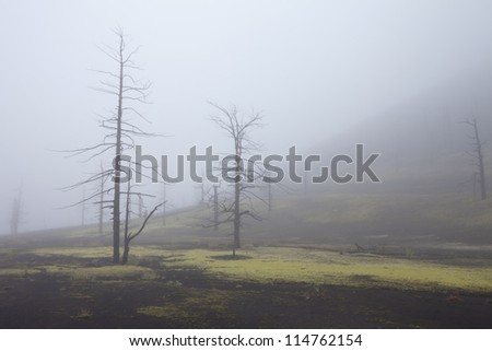 Dead forest filled up with ashes from a volcano on Kamchatka in Russia - stock photo