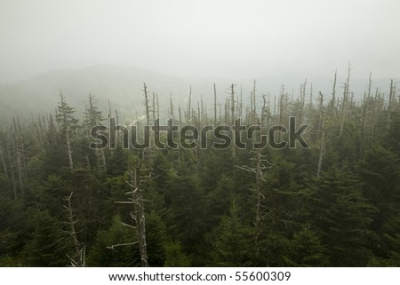 Dead Fraser Firs, Clingmans Dome, Great Smoky Mountains NP