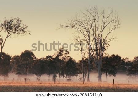 Dead gum tree australian bush outback scene with horses in fog - stock photo